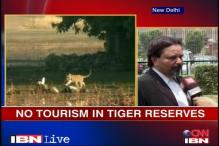 SC ruling a landmark decision: Tiger conservation authority