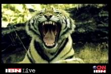 TN: 'Closing tiger reserve to ruin livelihood'