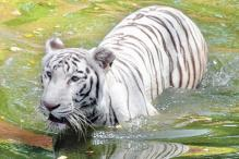 Hyderabad: Endangered animals thrive at zoo