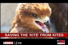 Duo rescue birds injured by kite-flying threads