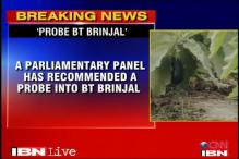 Parliamentary panel orders probe into BT Brinjal