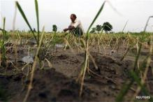 Andhra alarmed over fall in paddy cultivation area