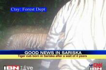 Tiger cub born in Sariska after 4 years