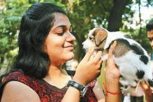 Chennai: Raising a 'paw' for dog adoption