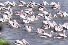 Bangalore: Hebbal lake a haven for migratory birds