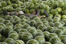 Watermelon helps prevent heart attack, curbs weight