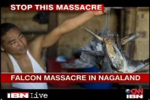Nagaland falcon poaching: Will Environment Minister step in?