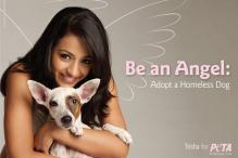 A big no to animal cruelty: Trisha Krishnan