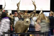 Plane forced to abort landing after deer spotted at airport