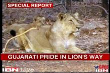 SC order to move Gir lions to MP has Gujarat govt up in arms