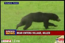 Assam: Villagers beat a bear to death after it injures 10 people