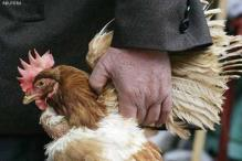 China's bird flu outbreak cost $ 6.5 billion
