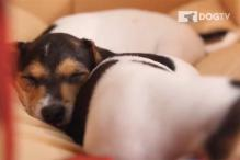 TV goes to the dogs with first channel for canines, DOGTV