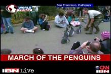 Watch: Annual march for graduated Penguins in US