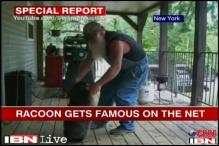 Watch: Man's videos with raccoon bring him fame