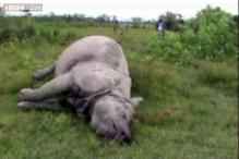 Assam: 2 rhinos killed in Kaziranga National Park