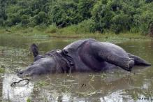 Rhino shot dead in Kaziranga by poachers, take away horn, ears