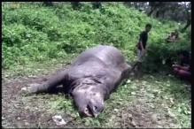 Assam: Poachers kill 2 rhinos at Rajiv Gandhi National Orang park
