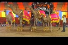 Ban likely on animal shows, circus industry struggles to survive