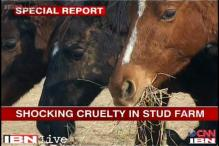 Six race horses die of malnutrition, over 40 found abandoned