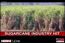 Muzaffarnagar riots lead to downfall of the sugar industry