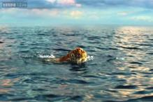 Tiger's near-drowning incident in 'Life of Pi' was an accident: Ang Lee