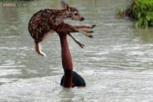 These photos of boy risking his own life in flood waters to save baby deer from drowning will make you tear up just a little