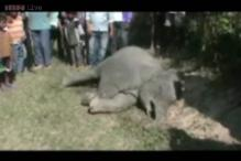 Three elephants die after being hit by a train in Assam