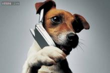 This is a little embarrassing. Nebraska dog dials 911 on its owner's smartphone but won't report emergency