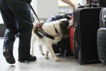 How sniffer dogs detect explosives decoded, claims Scientists