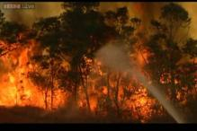 Wildfire continues to rage in Tirupati, efforts on to control it