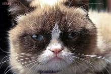 Watch out world, Grumpy Cat has hit 'terrible twos'