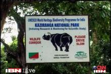 Adult male Rhino killed by poachers in Kaziranga