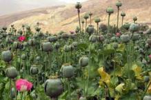 Sona Ram Choudhary seeks opium high to attract voters