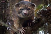 Top 10 new species for 2014 includes an appealing carnivorous mammal, 12-metre-tall tree hiding in plain sight