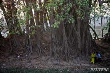 500-year-old banyan tree gets tourist spot status in Odisha