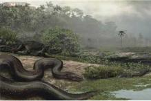 Forget Anaconda, the biggest snake on Earth had crocodiles for dinner 60 million years ago!