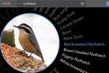 Birdsnap: A new app that helps you identify birds