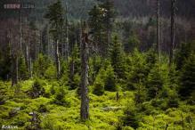 Centre plans socio-economic survey in forest villages