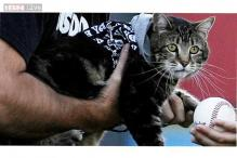 Hero cat who saved a boy from a dog attack throws the first pitch at a baseball game