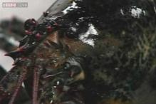 Maine wildlife officials charge local fisherman for unlawfully possessing 'egregious' lobsters