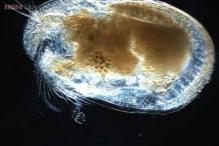 World's oldest giant sperm measuring 1.3 mm found in Australia