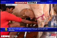 Government should fix price of the milk we sell: Haryana dairy farmers