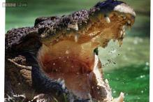 Man snatched in Australian croc attack: police