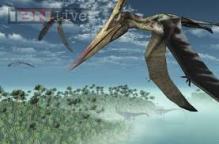 Dinosaur-era flying reptiles were extremely social