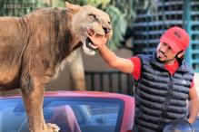 Photos: Meet @humaidalbuqaish - Instagram's fearless Arab lion whisperer pets, cuddles and plays with wild animals