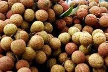 Litchi sales, export hit by encephalitis syndrome