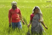MP registers record agri growth at 24.99% in 2013-14