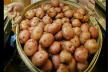 Potato futures hit lower circuit, plunge 4% on FMC curbs