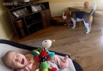 Watch: Awww! Guilty dog Charlie apologises to a baby girl for stealing her toys by showering her with gifts